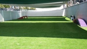 The Barkley pet resort in Beverly Hills, Calif. Installation and photo courtesy: Waterless Turf