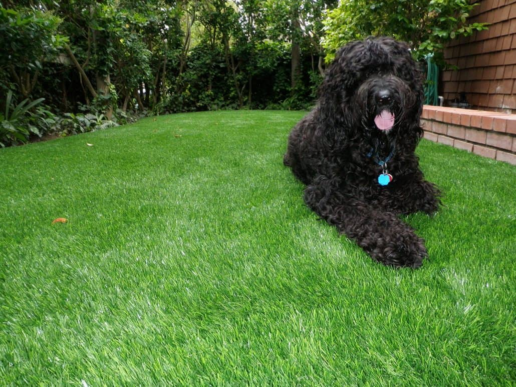 Artificial Grass Pet System Synthetic Grass Warehouse