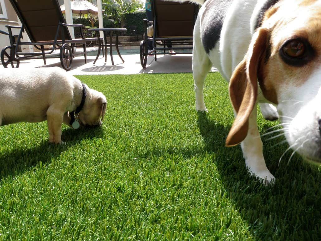 Artificial Grass Pet System | Synthetic Grass Warehouse